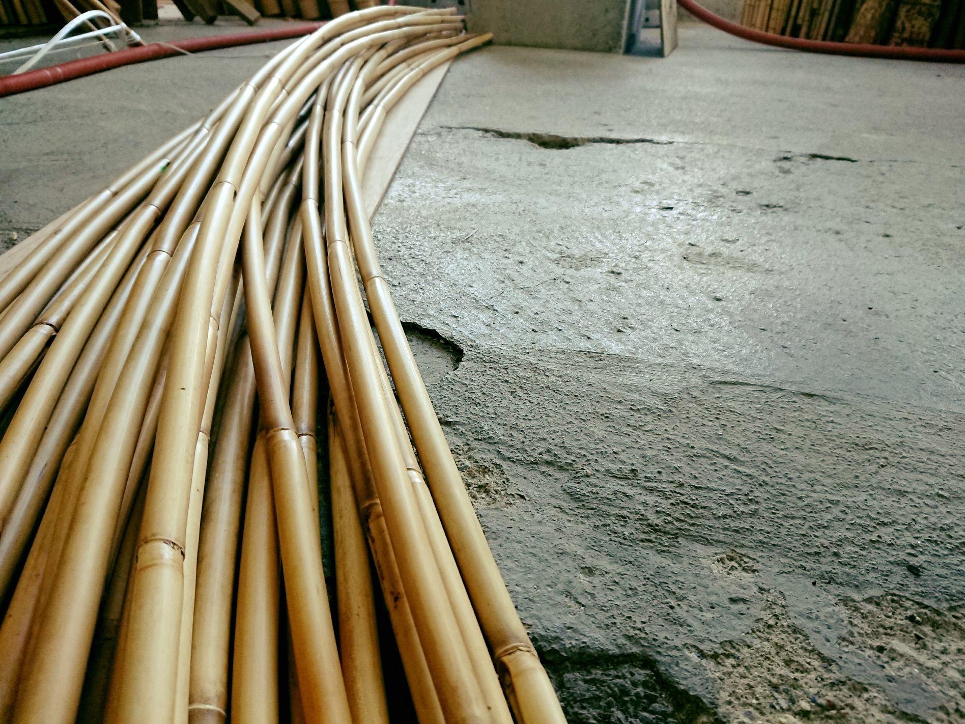 竹の画像 p1_2